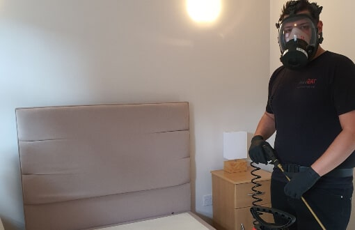 local bed bug removal