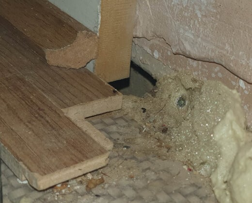 urgent rat control