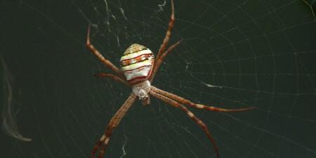 local spider exterminator