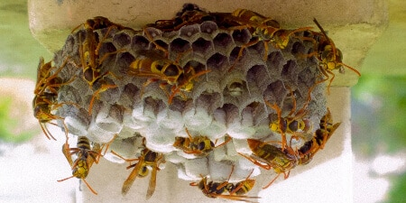local wasp nest removal