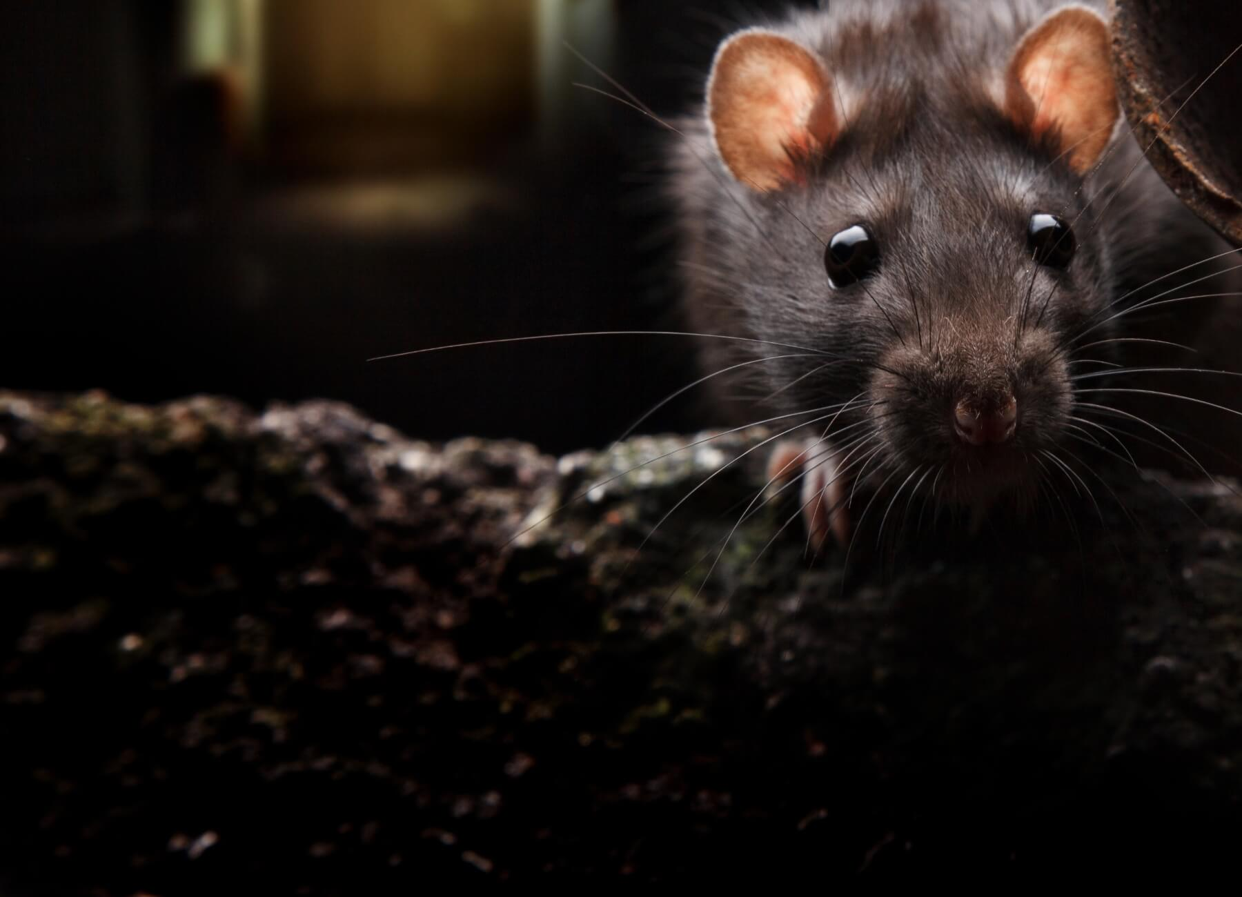 professional pest control in london