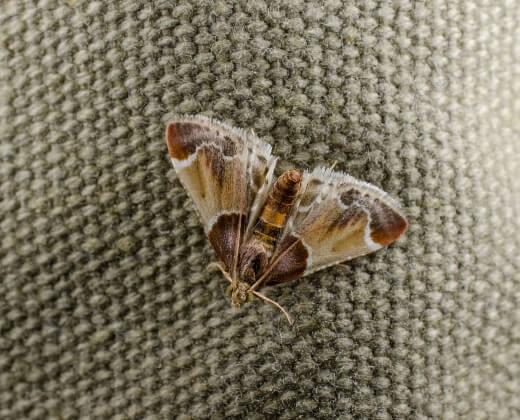 moth control near you