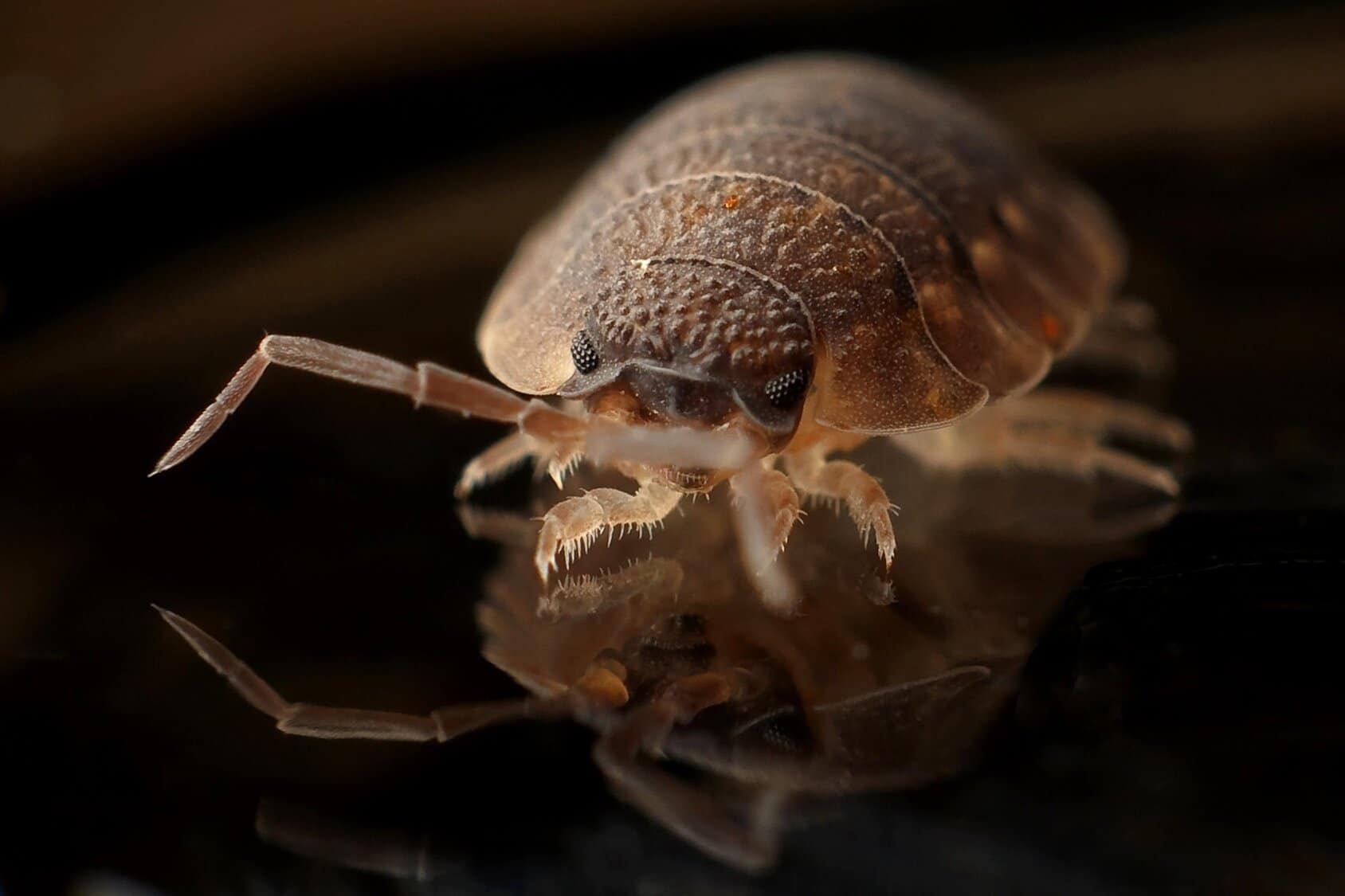 bed bugs control expert
