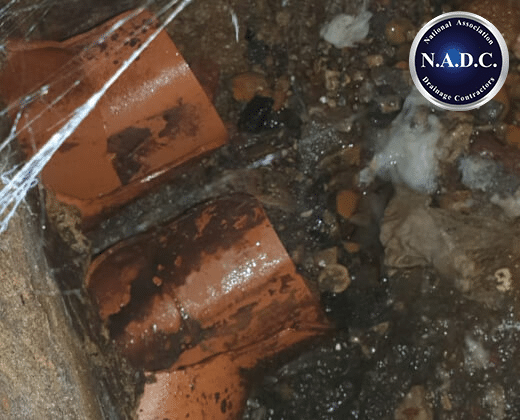 drain rodents survey