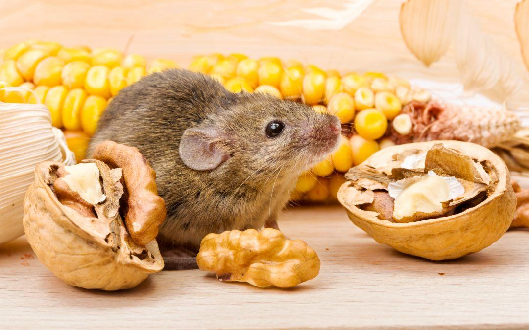 The Hidden World of Mice