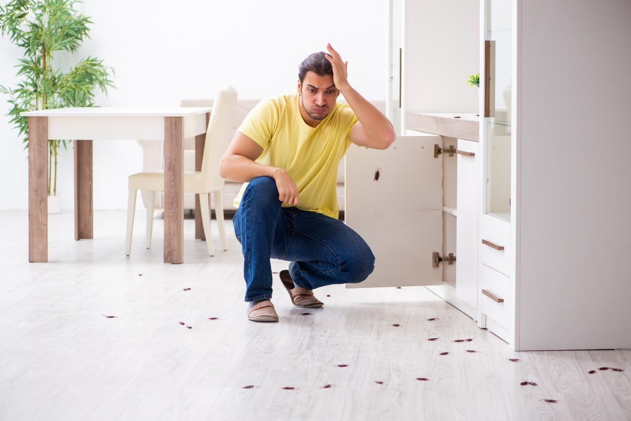 Pest Control in UK: Who's Responsible Landlord or Tenant? AccuRat