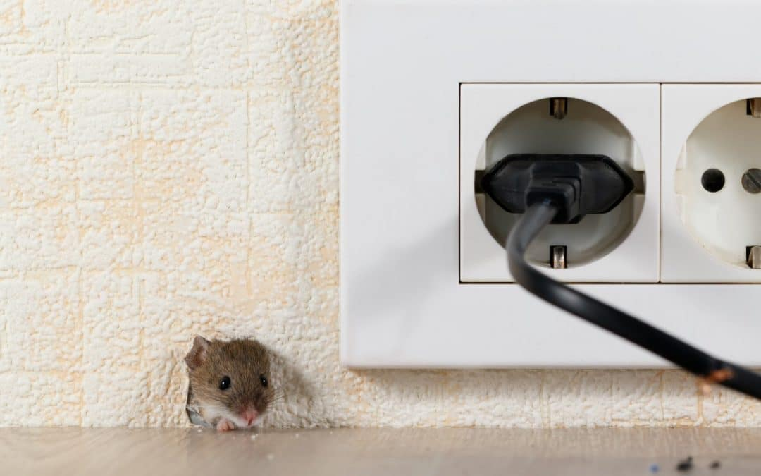 Pest Control in UK: Who's Responsible Landlord or Tenant?