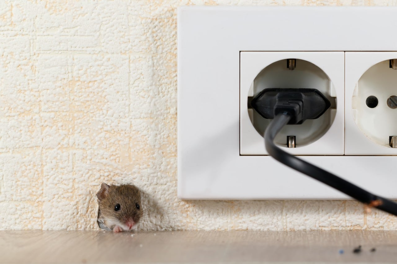 The Hidden World of Mice AccuRat