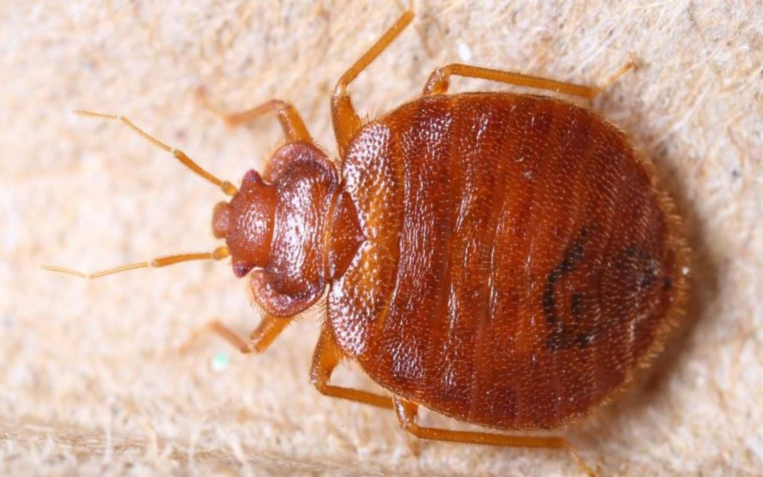 Best Heater for Bed Bugs [And How To Do It]