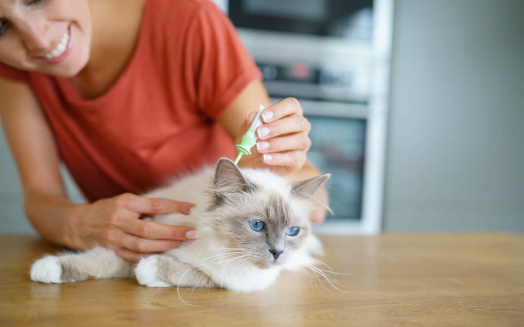 treatment against fleas over a cat