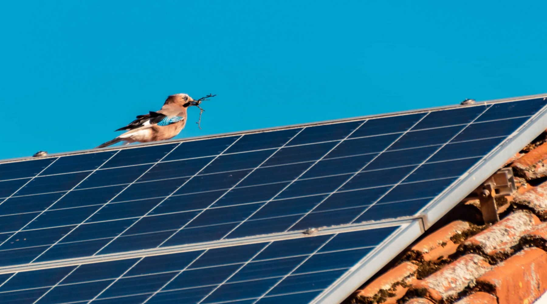 Bird Proofing Solar Panels and Your Roof AccuRat