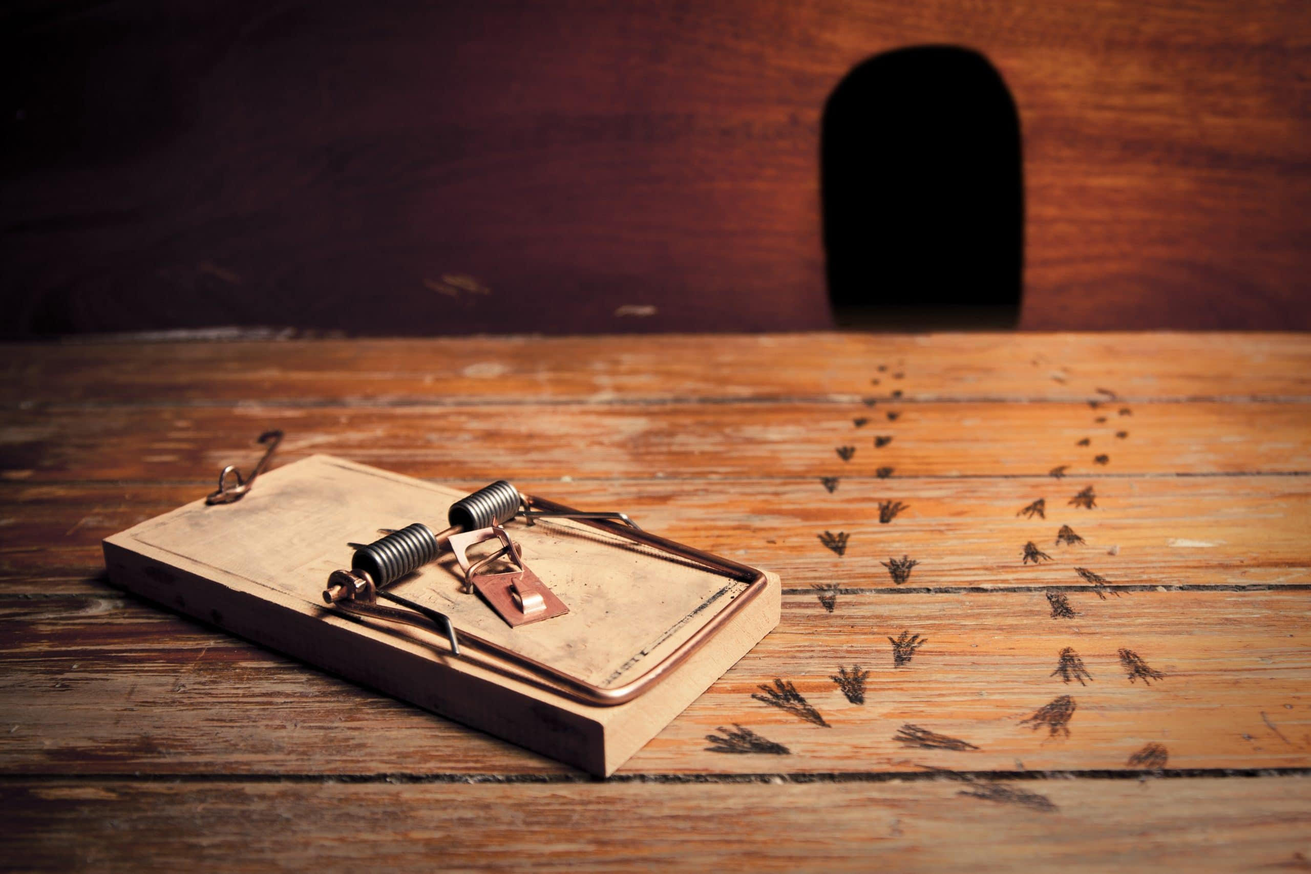 Choosing a rat or mouse trap, plus 6 tips for success AccuRat